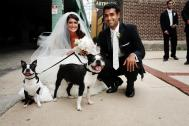 Jenna and Anup with the Boston Terriers - Chloe and Chewy
